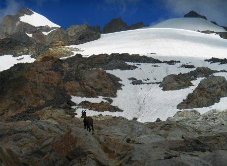 Piccolo Monte Bianco (Petite Mont Blanc) mt. 3431