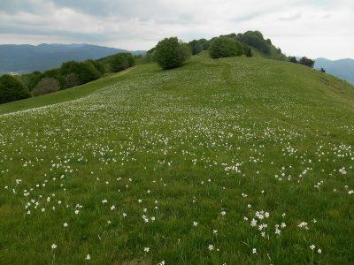 Monte della Cavalla mt. 1328
