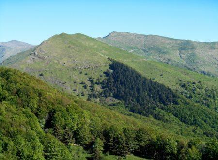 Monte Monega mt. 1882
